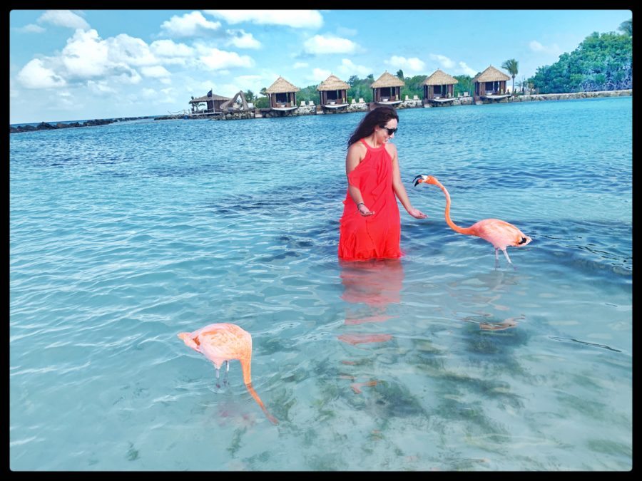 Girl in Pink dress standing in the water with two pink flamingos around her.