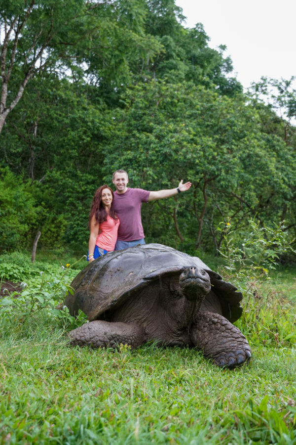 Couple standing behind a very large tortoise