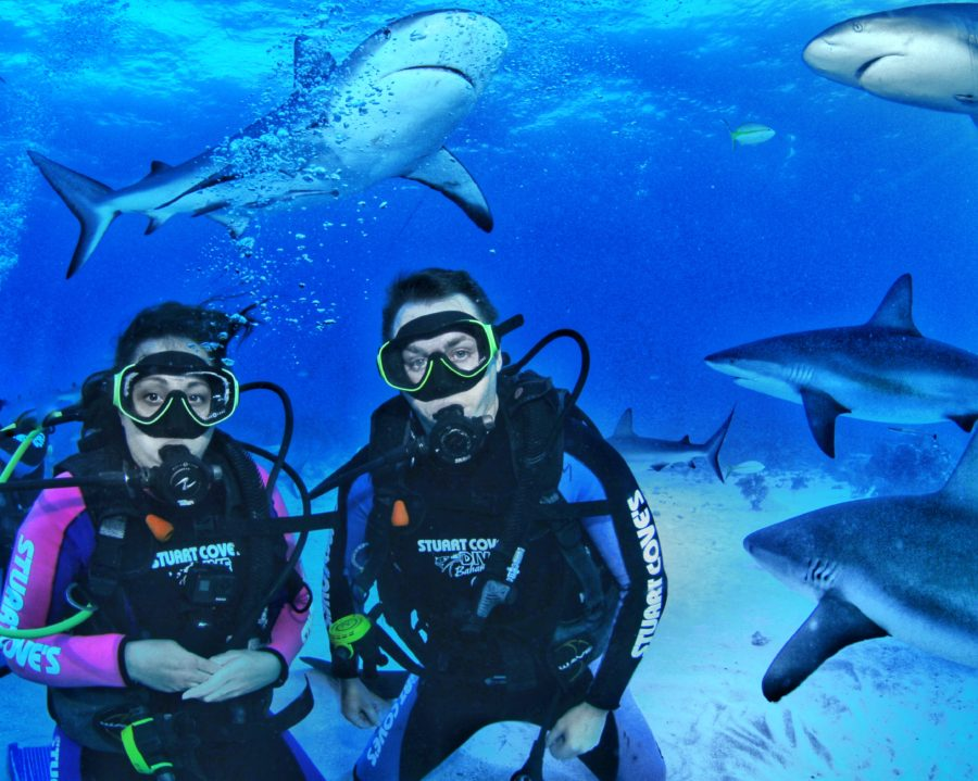 Couple scuba diving with sharks swimming all around